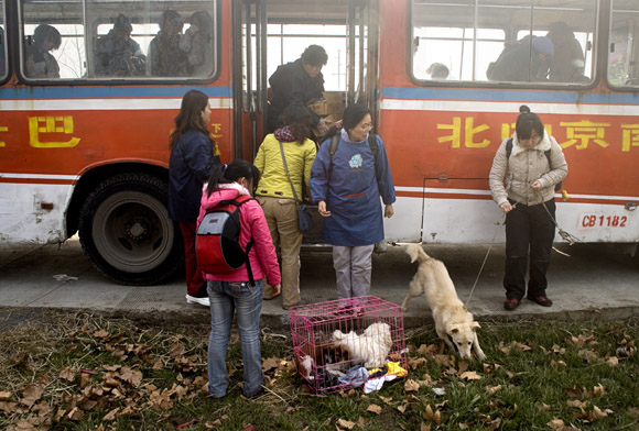 Volunteers leave a rented bus after arriving at Ha Wenjin's no-kill dog and cat rescue farm outside Nanjing, Jiangsu, China.