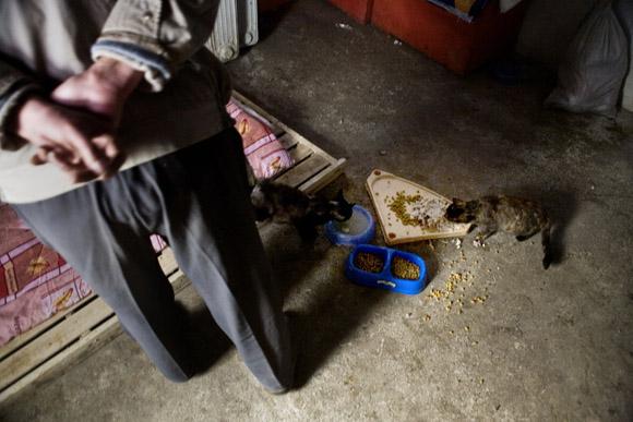 Volunteers feed cats in a small farmhouse at Ha Wenjin's no-kill dog and cat rescue farm outside Nanjing, Jiangsu, China.